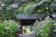瑞雲山 本光寺
