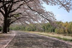 散策路もピンク色に