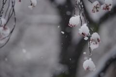 春天的大雪