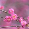春への予感5