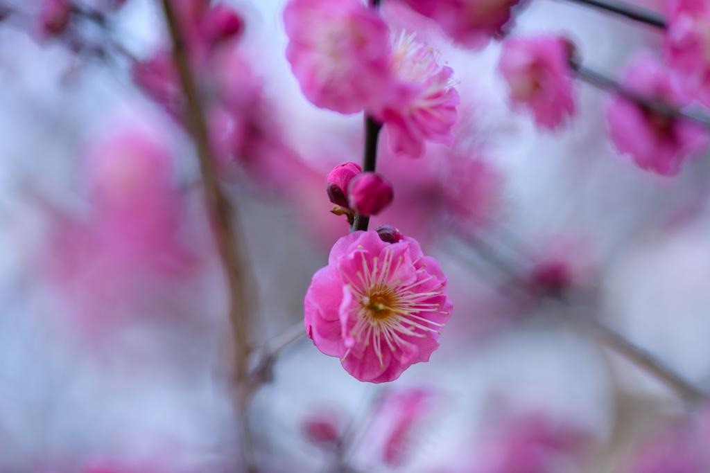 厳冬の日に春の声2