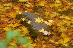 昭和記念公園の秋6