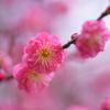 春への予感6