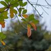 初冬の中の秋8