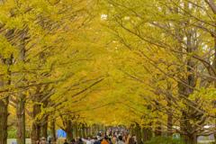 昭和記念公園の秋10