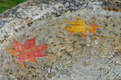 昭和記念公園の秋7