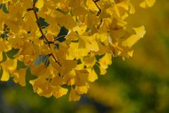 昭和記念公園の秋4
