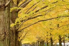 昭和記念公園の秋3