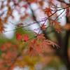 初冬の中の秋6