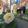 美術館前の花
