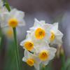 春への予感7