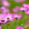 群れる花6