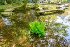 池に映る景色5