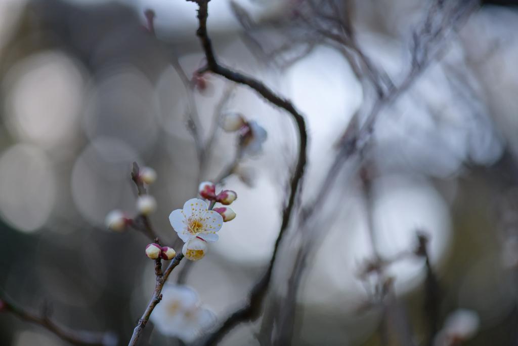 厳冬の日に春の声4