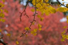 昭和記念公園の秋8