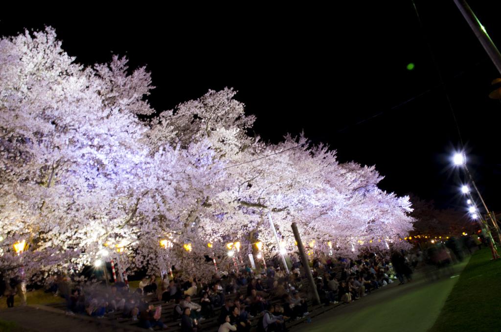 一目千本夜桜