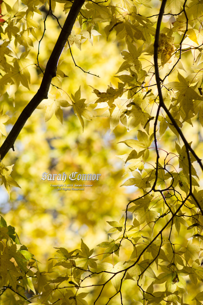 窓の向こうに秋色
