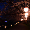 夜桜にチャレンジ_2