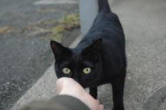 近所の黒猫ちゃん2