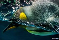 海遊館のペンギンさん
