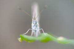 緑の觔斗雲に乗った蝶