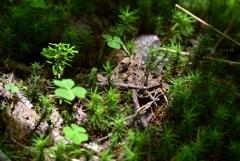 森の小さな世界