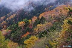霧まく秋2