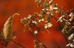 秋を味わう5