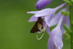 花と蝶12
