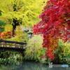 秋の切撮り24