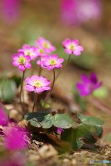 花は野のまま8
