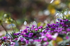 ガーデンの春