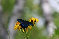 花と蝶16