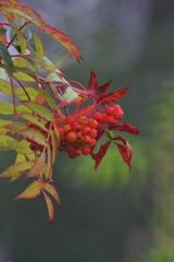 花楽の里(秋の気配)