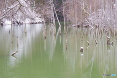 冬の自然湖2
