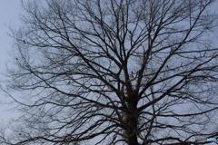 鳥のなる木