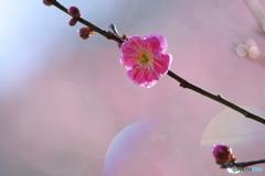 春の香り3