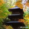 秋の切撮り25