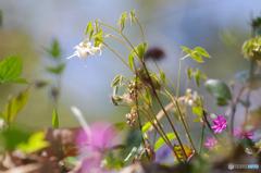 花は野のまま7