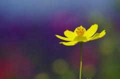 黄色のある風景1