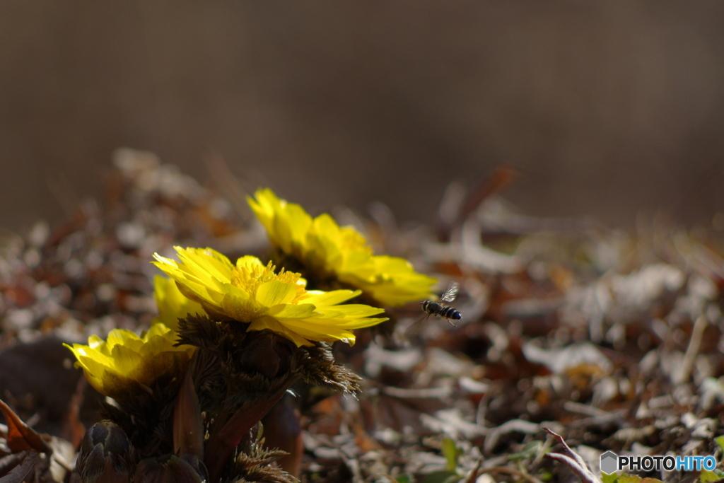 春の兆し2