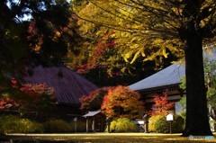 紅葉の津金寺2
