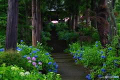 山寺の紫陽花