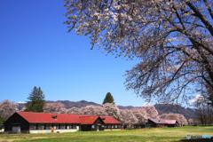 牧場の春2