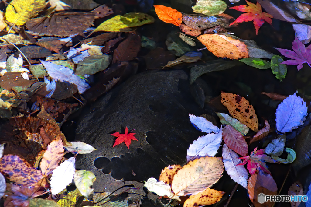 秋の切撮り44