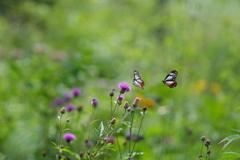 花と蝶17