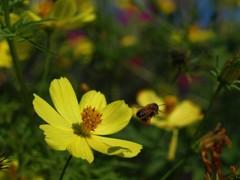 黄色のある風景4