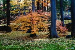 秋の切取り2