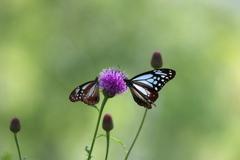 花と蝶18