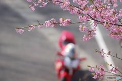 花面ライダー